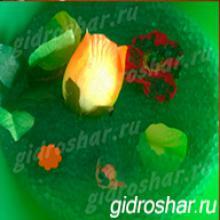Гидрогель салатовый 13-15 мм, 1000 шт