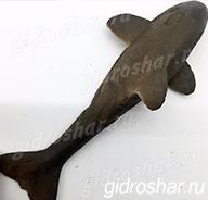 Растущая в воде акула серая, 1 шт